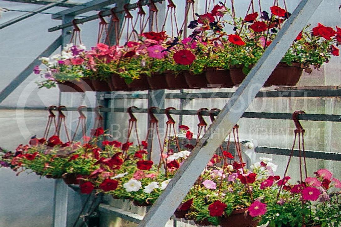 совхоз цветочный, рассада оптом краснодар 21