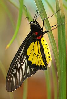 Живые тропические бабочки и другие животные