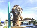 Мадагаскар, зоопарк