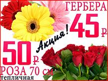 Красная роза по 50 р. и гербера по 45 р.
