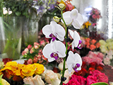 Амелия, салон цветов